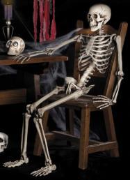 Skelet 160cm